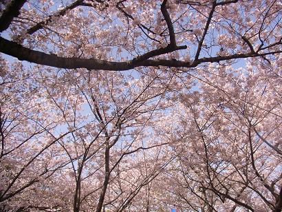 花見①.JPG.jpeg