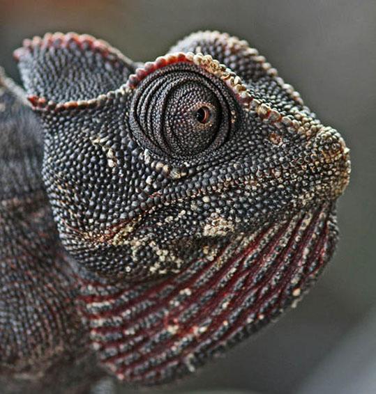 africa-05-06.1146644400.chameleon_on_the_living_desert_tour2.jpg