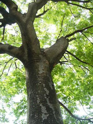 tree2.JPG.jpg